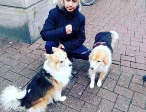Mord in Celle: 15-jähriger Kurde Arkan Hussein erstochen